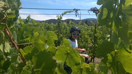 Napa Valley SegwayTours : photo0.jpg