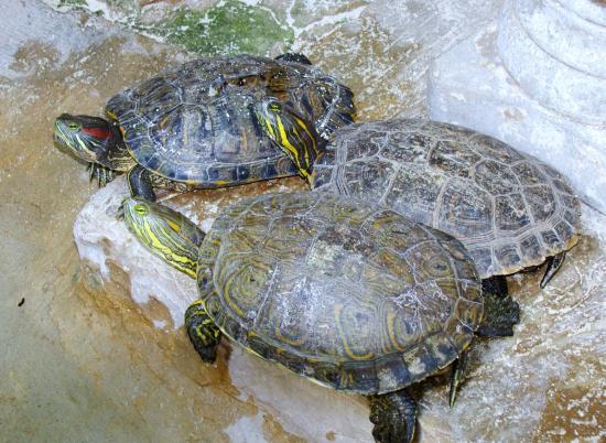 Estanque de tortugas picture of hotel posada edem - Estanque para tortugas ...