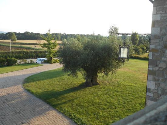 Vista giardino con ulivo foto di il cantico san - Giardino con ulivo ...