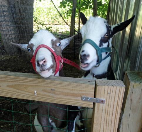 Brattleboro North KOA: Feed them carrots, they'll love you!