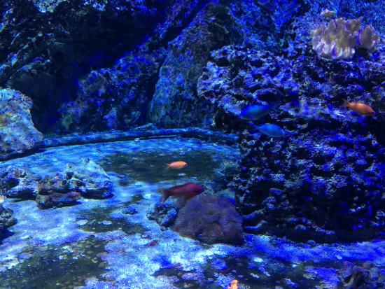 Milan Aquarium Related Keywords & Suggestions - Milan Aquarium Long ...