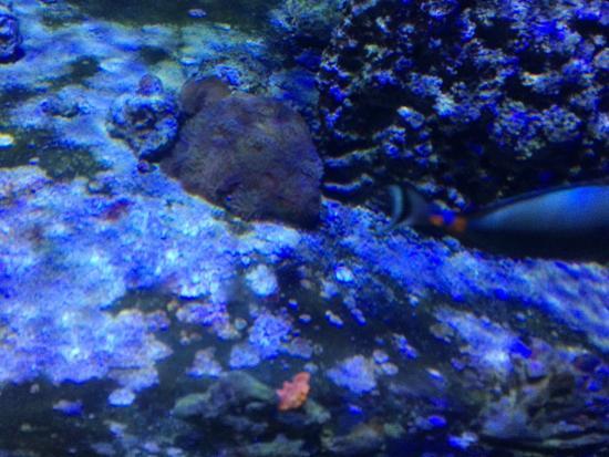 aquarium - Picture of Acquario civico, Milan - TripAdvisor