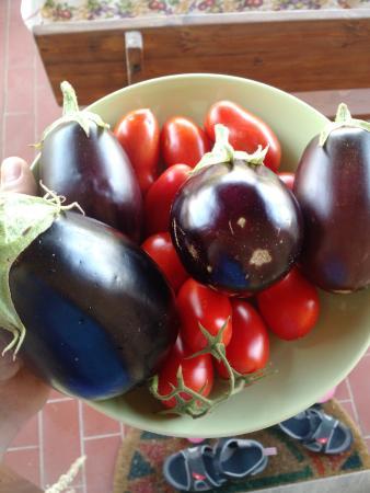 Agriturismo Barbadoro: Piccolo raccolto delle buonissime verdure a disposizione dei clienti