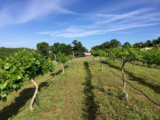 Chestnut Trail Vineyard