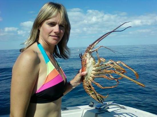 Discover Diving Dive Center Daytona Beach Lobster