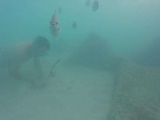 Pompano Beach Club Snorkeling Right Off