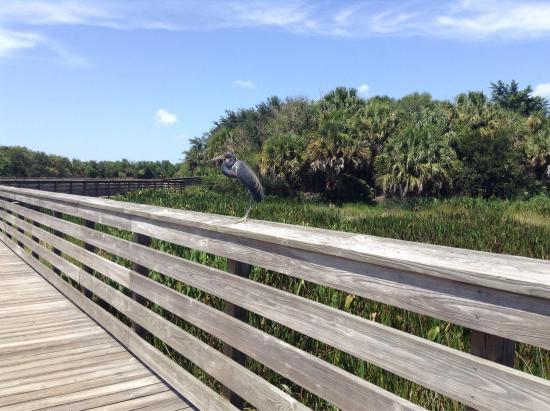 Green Cay Nature Center Wetlands Boynton Beach Fl