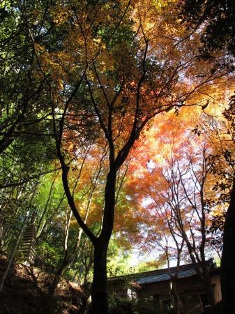 Iwayado Park : 岩屋堂の紅葉。
