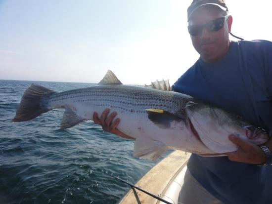 Captain steve with another striper picture of block for Block island fishing charters