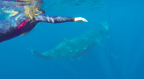 Ha'apai Islands, ตองกา: swim with whales!!