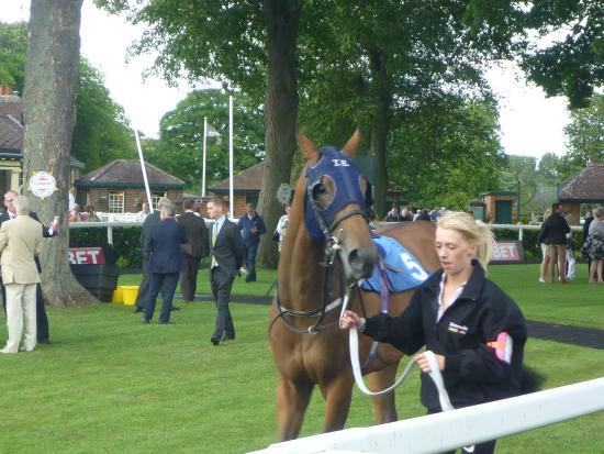 Ripon Racecourse: Parade Ring