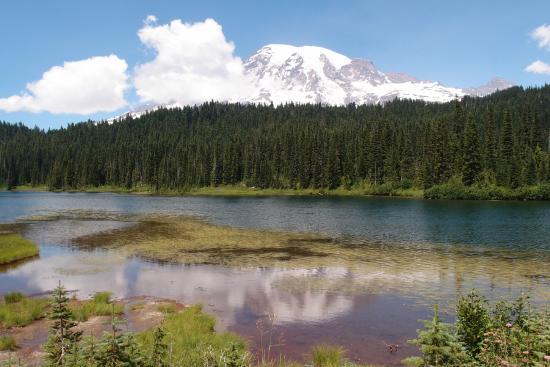 Tipsoo Lake Loop : У озера