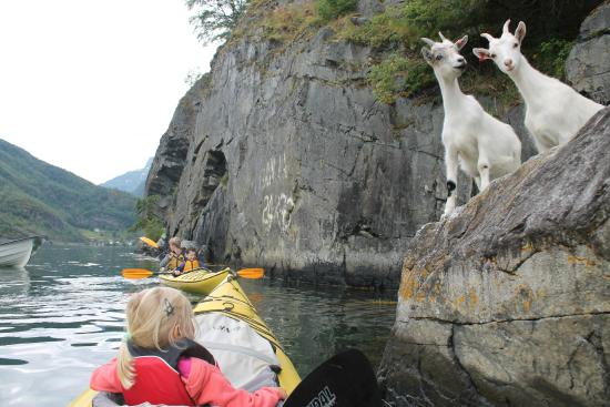 Njord - Seakayak and Wilderness Adventure Day Tours: Geitjes gespot