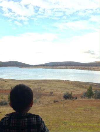 Cool Mountain Lodge: My son enjoying the view at breakfast