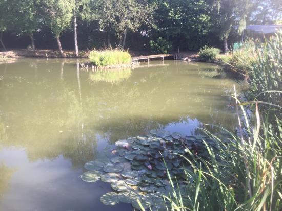 Touquin, Francia: Les étangs à côté de la piscine