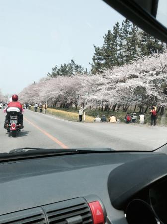 Nanohana Road: 菜の花ロード