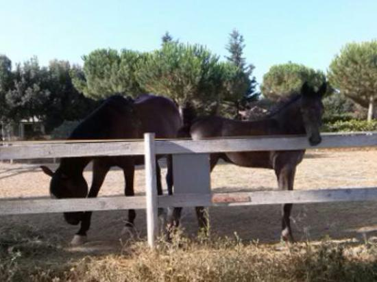 Agriturismo La Serrata: cavalli nel recinto