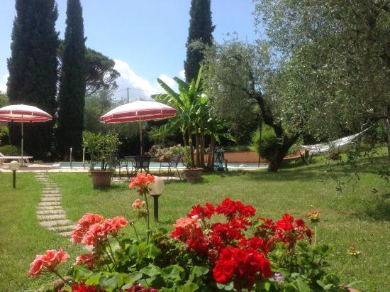 Olivanda Bed and Breakfast: Giardino di Olivanda - Olivanda's garden
