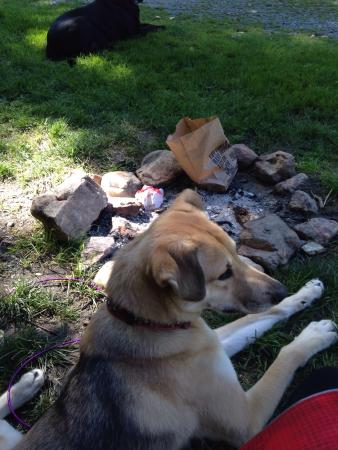 Boone KOA Campground: Even our dogs had a great stay