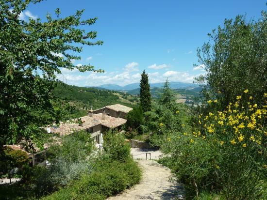 Fratticiola Selvatica, Italia: Uitzicht vanaf het zwembad