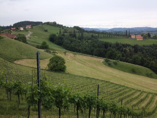 Gaestehaus Weingut Soell