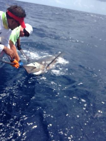 Ocean surfari fishing charters picture of ocean surfari for Virgin islands fishing