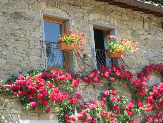 Agriturismo e Ristorante Sanvitale: Finestre delle camere