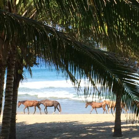 Casa Kau-Kan: Horses on the beach from suite.  Must do.