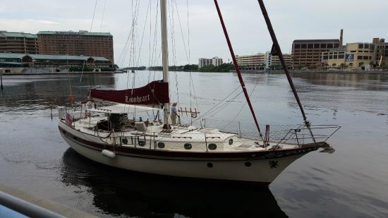 Olde World Sailing Line: The Lionheart