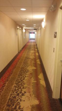 Hampton Inn & Suites Selma-San Antonio-Randolph AFB: hallways