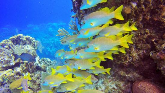 Southern Cross Club: Marine life