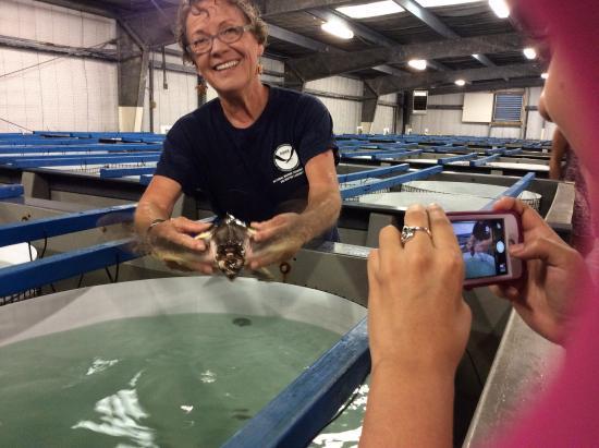 NOAA Fisheries Service Galveston Laboratory: Showing the turtles