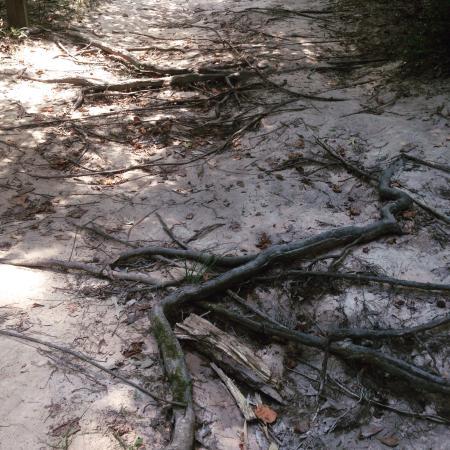 George Mitchell Nature Preserve: photo2.jpg