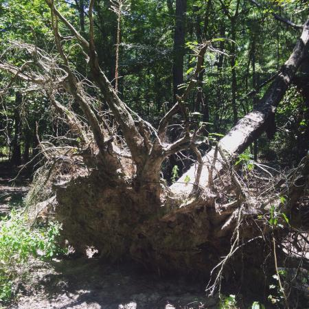 George Mitchell Nature Preserve: photo5.jpg