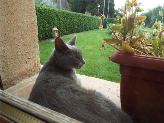 "Sovana Hotel & Resort: vista camera ""con gattino"""