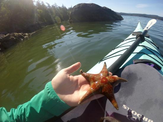 Rush Adventures: sea stars on the day tour