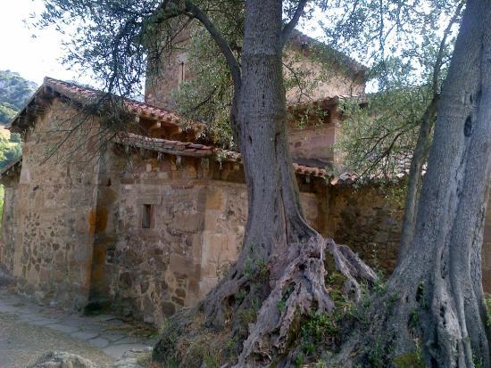 Iglesia de Santa Maria de Lebena: Vista desde el Olivo milenario