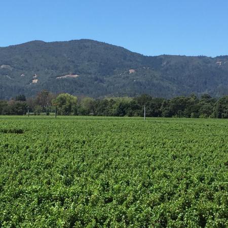 Rutherford, Kalifornien: photo4.jpg