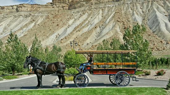 Palisade, CO: Horse-Drawn Wine Tour wagon outside of Wine Country Inn