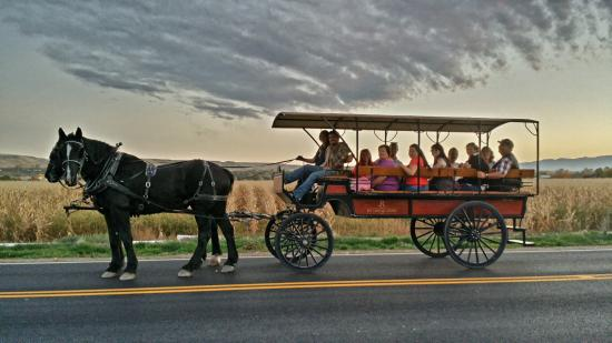 Horse-Drawn Sunset Tour in Palisade, Colorado