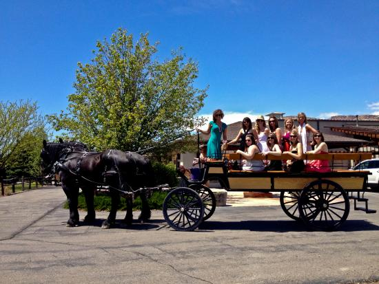 Palisade, CO: Horse-Drawn Wine Tour outside of Plum Creek Cellars