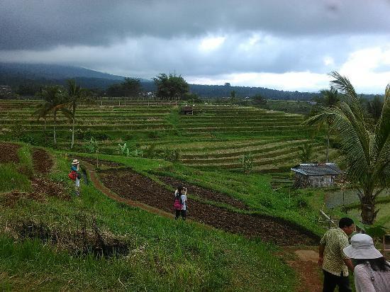 Bali Kuruma