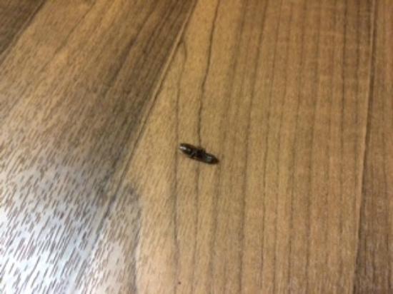 Extended Stay America - Boston - Burlington: Dead roach in my room