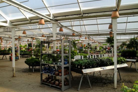 Molbak S Greenhouse And Nursery Lots Of Plants