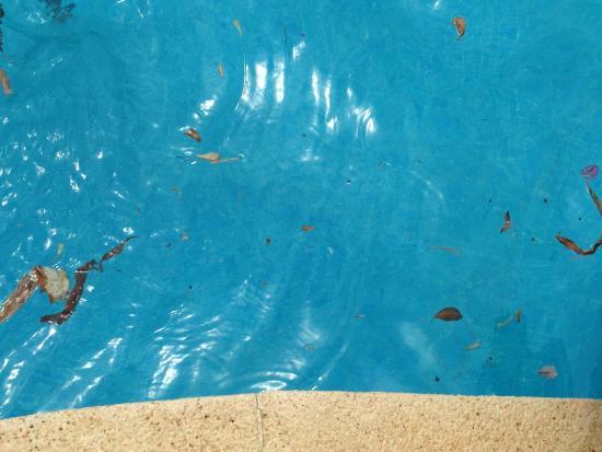 Piscine la journee picture of hyb eurocalas calas de for Journee piscine