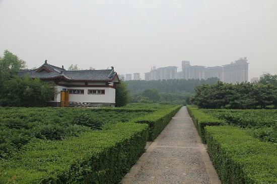 Luoyang International Peony Garden: Вид из парка на небоскребы вокруг