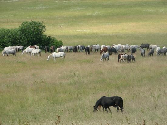 Dakovo, Croacia: Ivandvor pastures