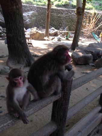 Takasakiyama Natural Zoo - 大分市、高崎山自然動物園の写真 - トリップアドバイザー