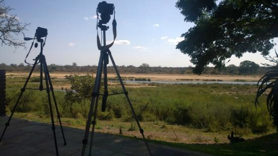 Ngwenya Lodge: View from the riverfront units