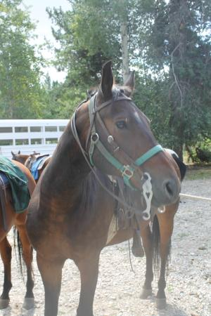 Bagley's Teton Mountain Ranch: Major